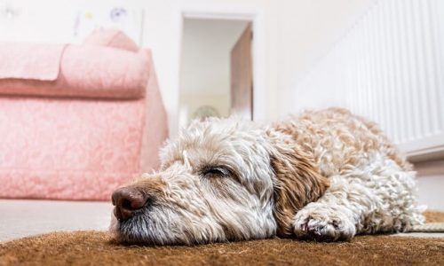 above-the-rest-carpet-cleaning-odor-control (1)